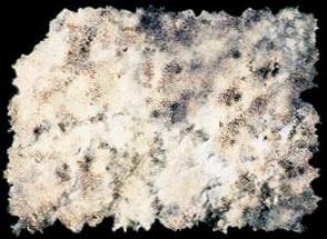 crumpledpaper