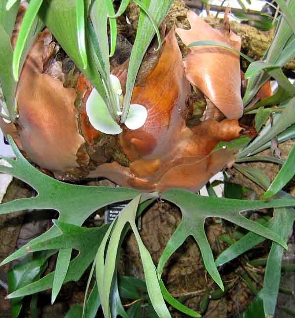 Exotic plant.