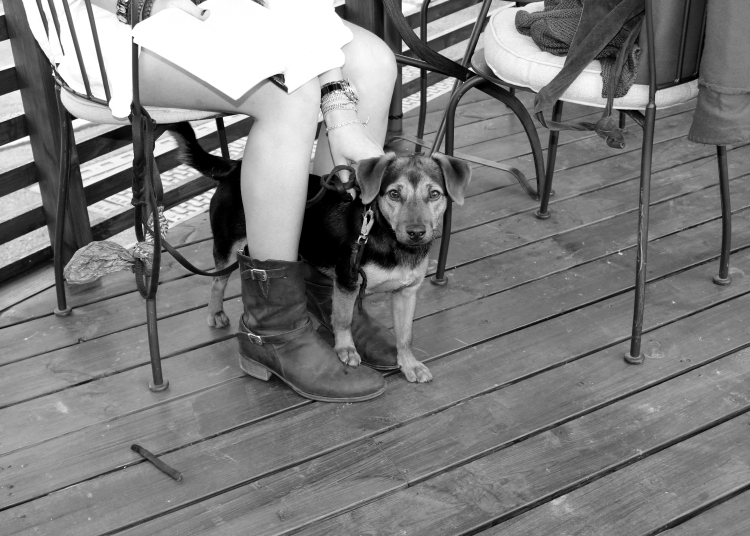 puppy at french cafe in oslo