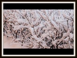 winterwonderland2013-2