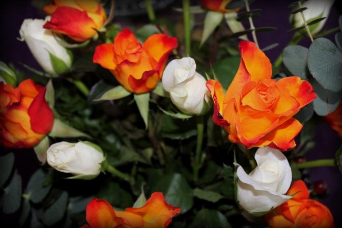 Bursting roses.