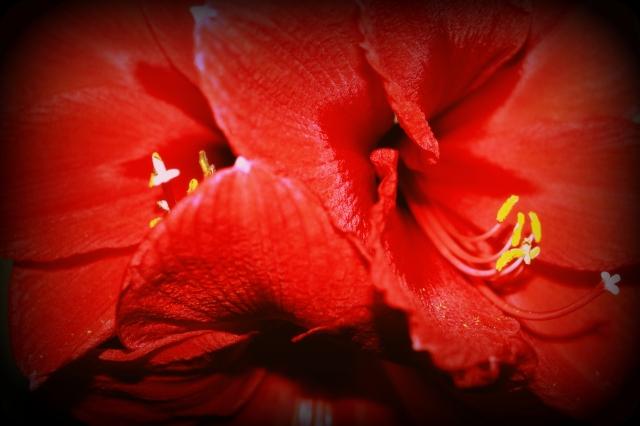 Flora, erotica no. 1