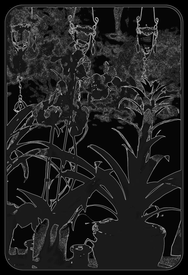 pottedplants1