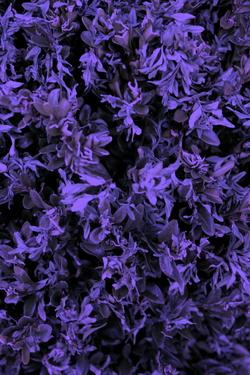 urban flora uf023